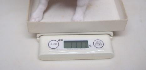 体重測定_d0006467_10573323.jpg