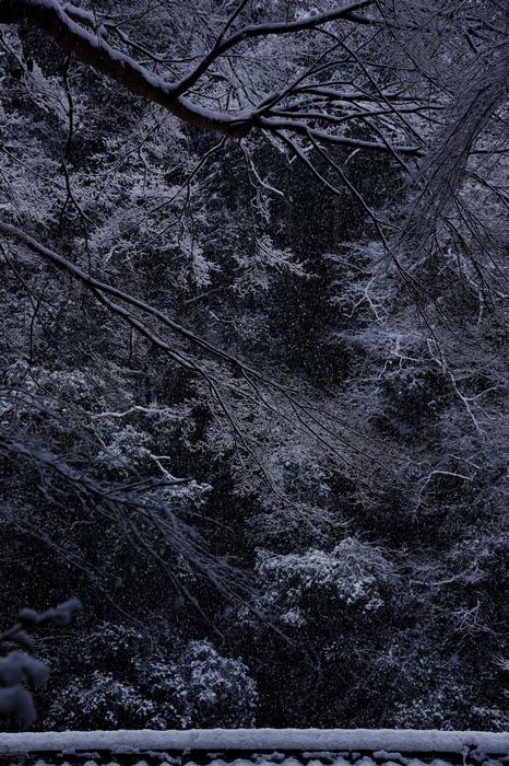 清滝川 雪景色 2016                                 _f0021869_22192681.jpg