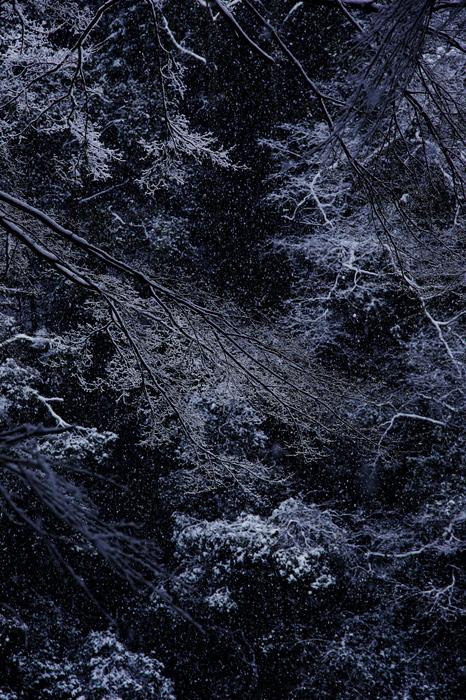 清滝川 雪景色 2016                                 _f0021869_22194685.jpg