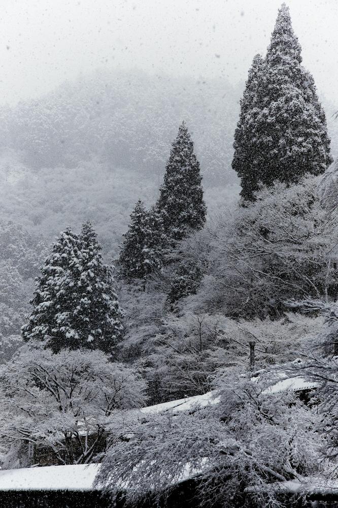 清滝川 雪景色 2016                                 _f0021869_22202867.jpg