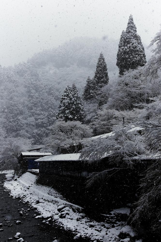 清滝川 雪景色 2016                                 _f0021869_22205450.jpg