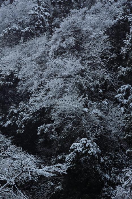 清滝川 雪景色 2016                                 _f0021869_22212165.jpg