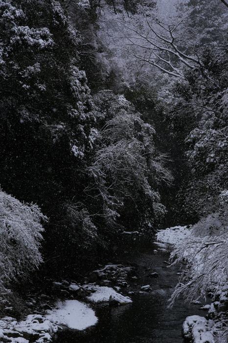清滝川 雪景色 2016                                 _f0021869_22215789.jpg