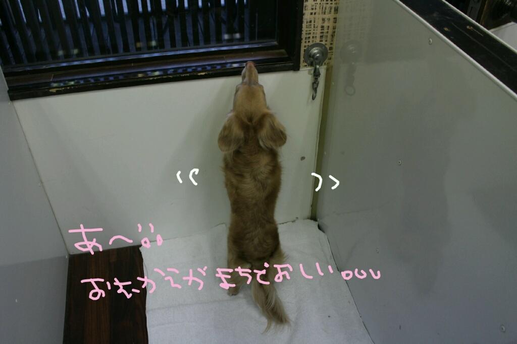 髪_b0130018_14151344.jpg
