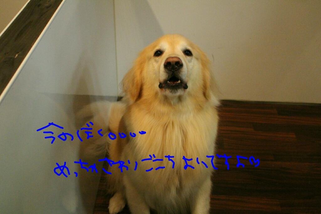 髪_b0130018_14153171.jpg