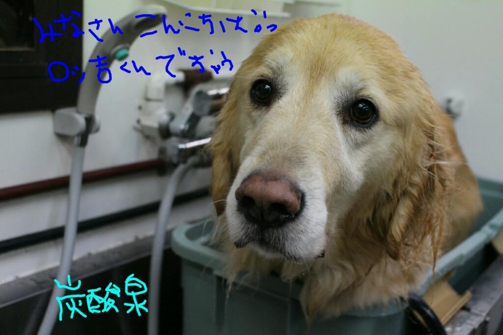 髪_b0130018_14251843.jpg