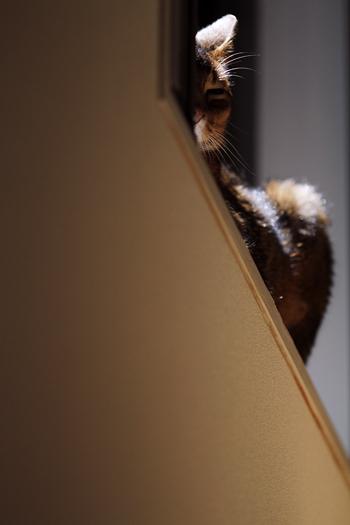 [猫的]とある日のルゥ_e0090124_0112071.jpg
