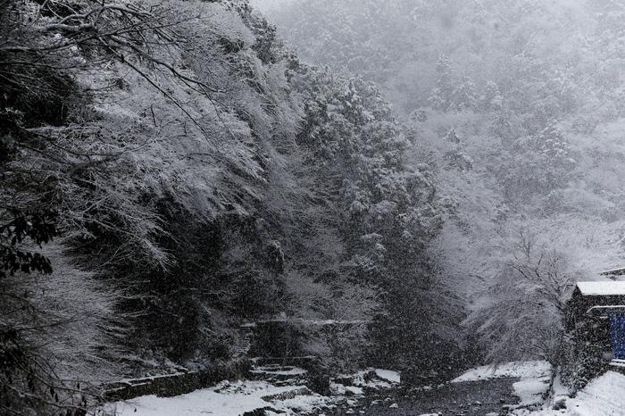 清滝川 雪景色 2016                                 _f0021869_23201526.jpg