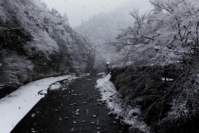清滝川 雪景色 2016                                 _f0021869_23204549.jpg