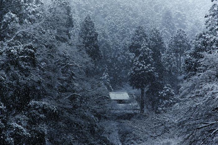 清滝川 雪景色 2016                                 _f0021869_23212318.jpg
