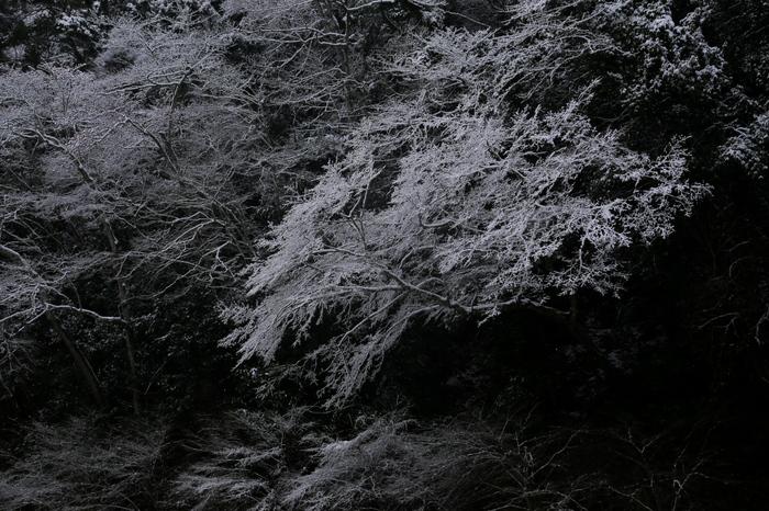 清滝川 雪景色 2016                                 _f0021869_23221963.jpg