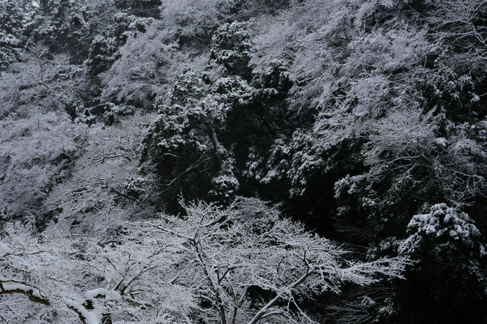 清滝川 雪景色 2016                                 _f0021869_23224329.jpg