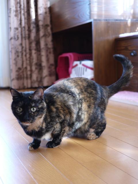 猫のお留守番 ワサビちゃん天ちゃんう京くん編。_a0143140_22454573.jpg