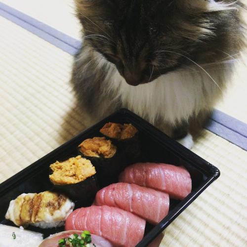 苗場のお寿司⭐︎しらかば_c0151965_07261413.jpg