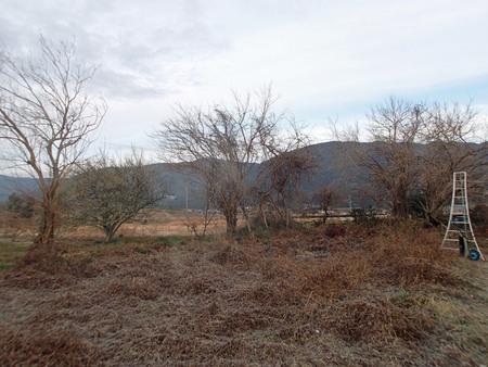 桑の木の伐採_a0026295_17492395.jpg