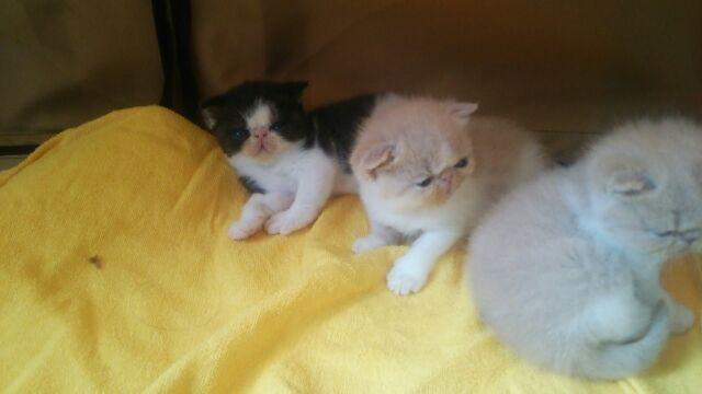 エキゾチック子猫ちゃん♪_e0033609_1725535.jpg
