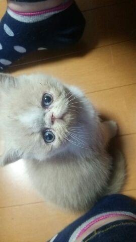 エキゾチック子猫ちゃん♪_e0033609_17255379.jpg