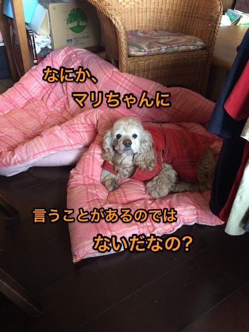 b0067012_8205677.jpg