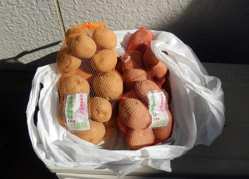 ジャガイモの種芋_b0137932_1224614.jpg