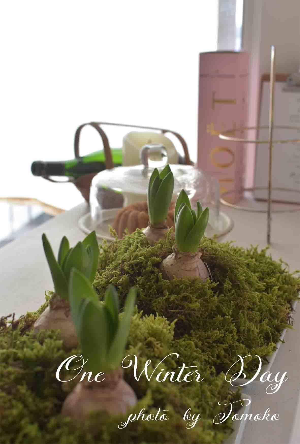 春の足音。。。_c0345348_07331507.jpg
