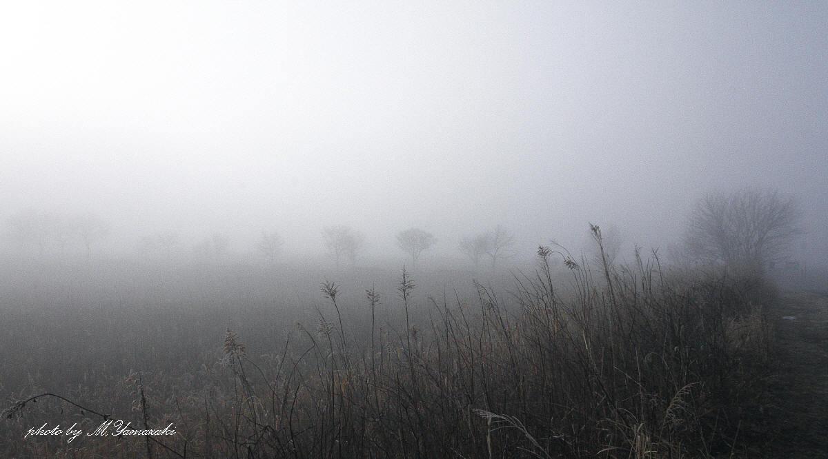 霧にかすむ鳥達 そのⅡ_c0217255_18114744.jpg