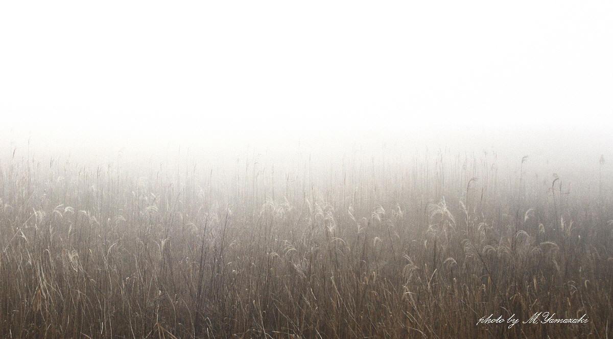 霧にかすむ鳥達 そのⅡ_c0217255_18115303.jpg