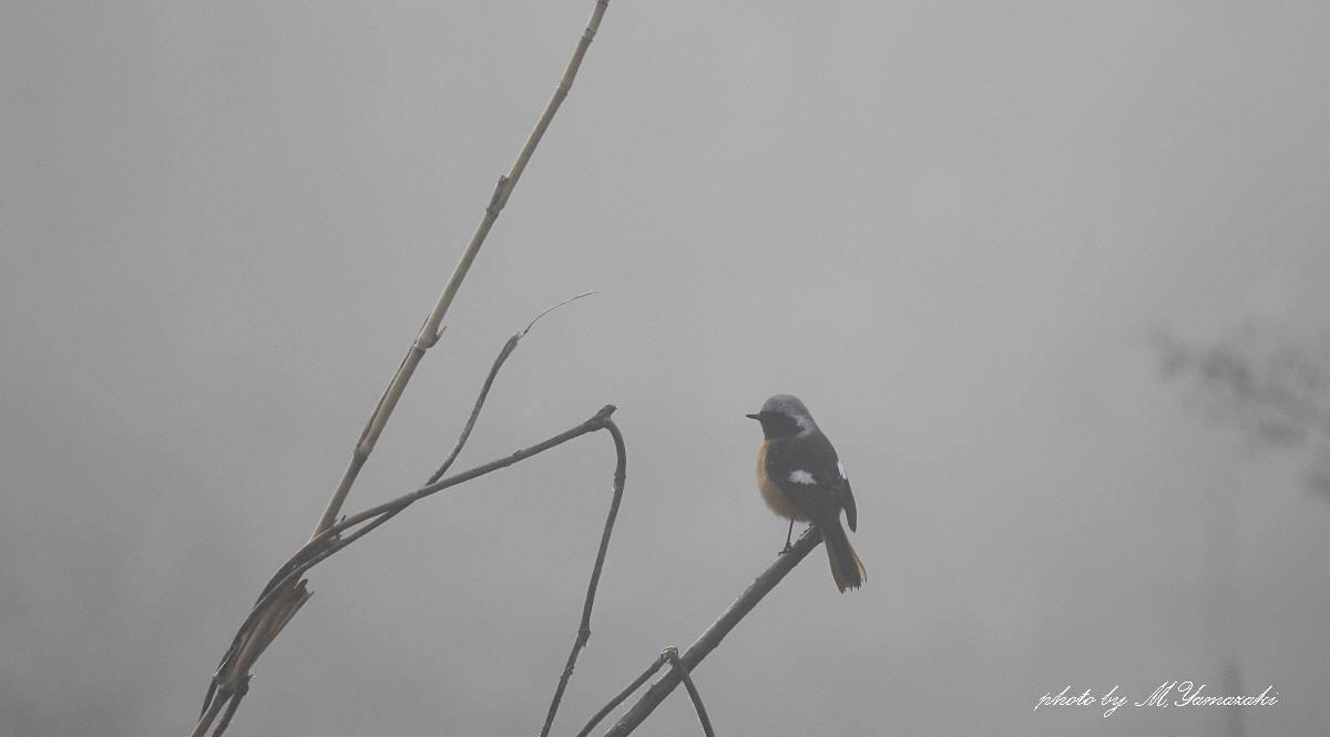 霧にかすむ鳥達 そのⅡ_c0217255_18115846.jpg
