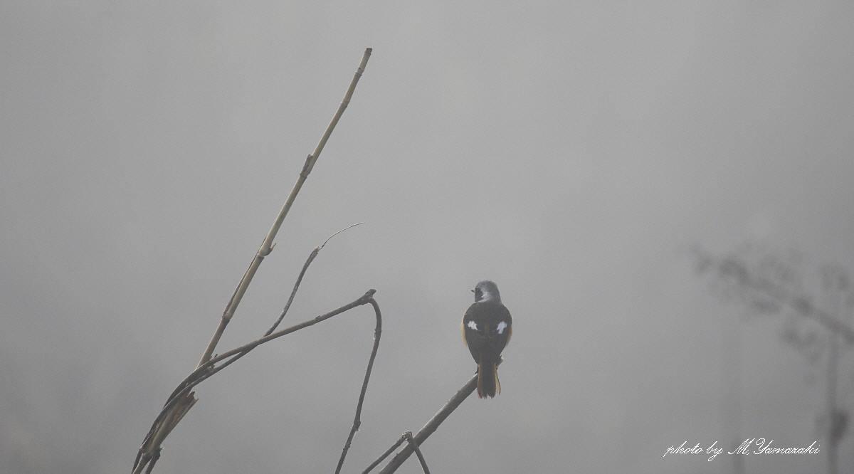 霧にかすむ鳥達 そのⅡ_c0217255_18120332.jpg