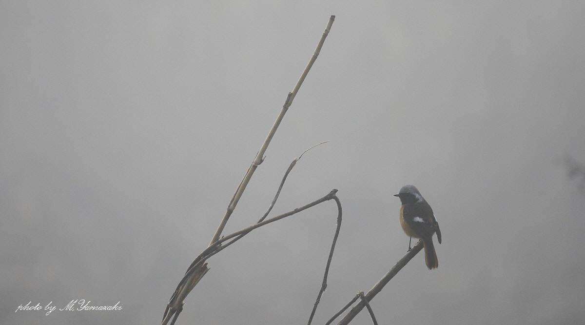 霧にかすむ鳥達 そのⅡ_c0217255_18120814.jpg