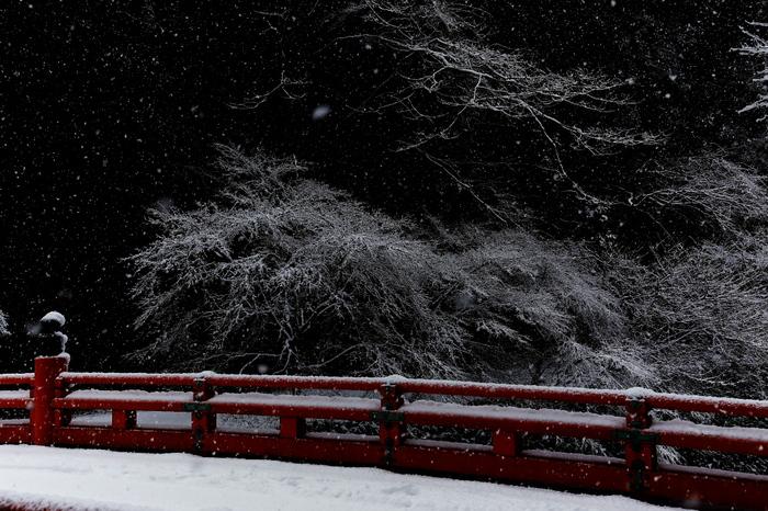 清滝川 雪景色 2016_f0021869_23151994.jpg