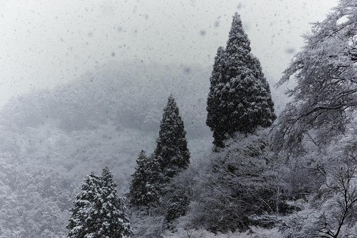 清滝川 雪景色 2016_f0021869_23154221.jpg