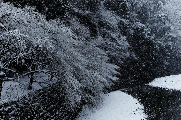 清滝川 雪景色 2016_f0021869_23162373.jpg