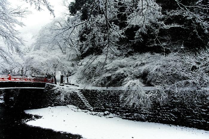 清滝川 雪景色 2016_f0021869_2317883.jpg