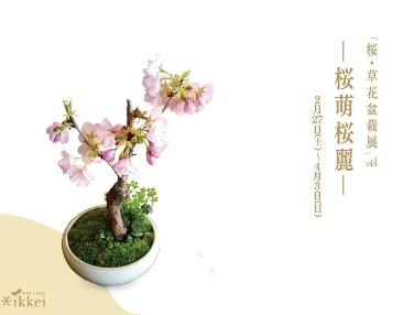 植物がつなぐ縁 苔のテラリウム作り_d0263815_15351635.jpg