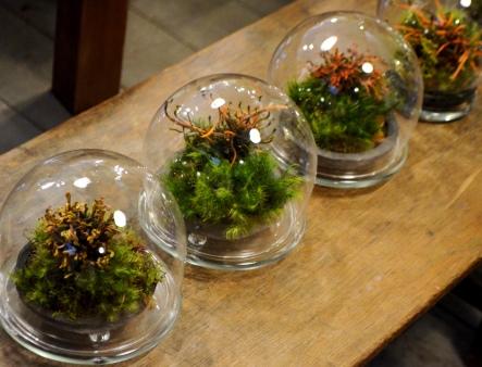 植物がつなぐ縁 苔のテラリウム作り_d0263815_15461141.jpg