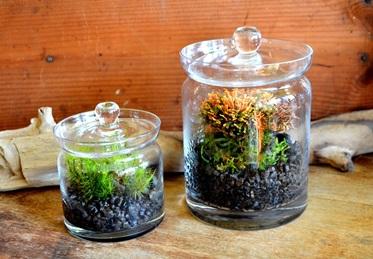 植物がつなぐ縁 苔のテラリウム作り_d0263815_16495932.jpg