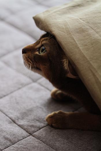 [猫的]のんびり_e0090124_022569.jpg