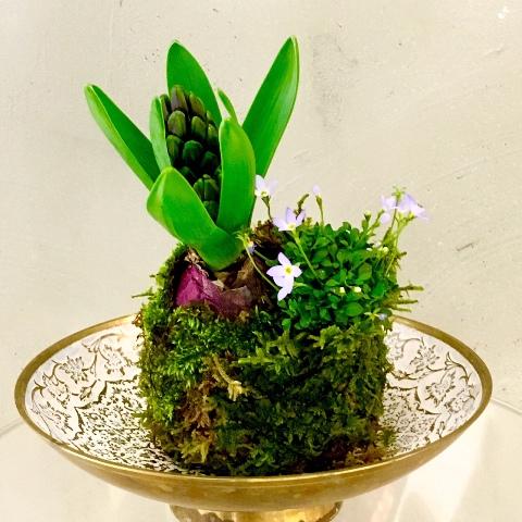 立春に ヒヤシンスの苔玉作り 春よこい♪_a0138976_19135959.jpg