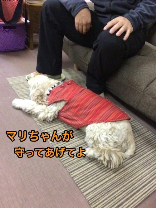 寄りそう看板犬_b0067012_040850.jpg