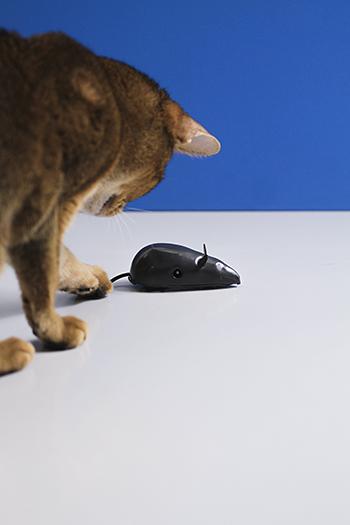 [猫的]ネズミのおもちゃ_e0090124_0135934.jpg