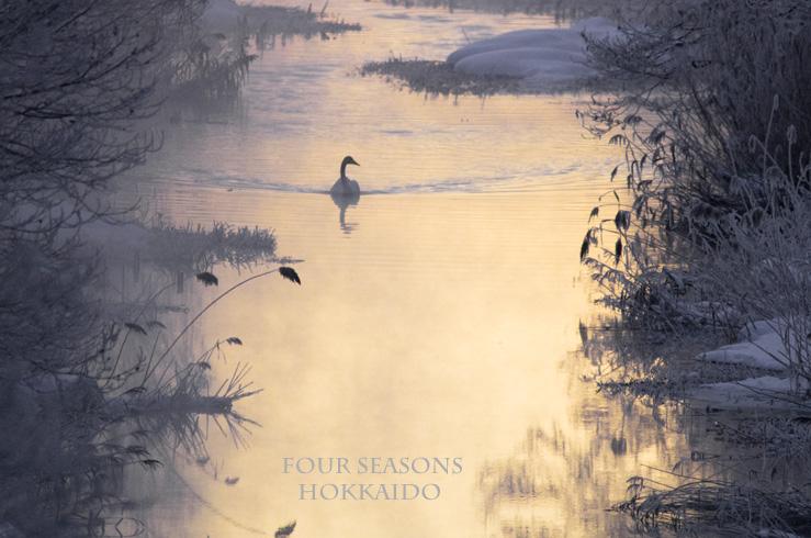 真冬の川を悠々と_f0152939_18533058.jpg