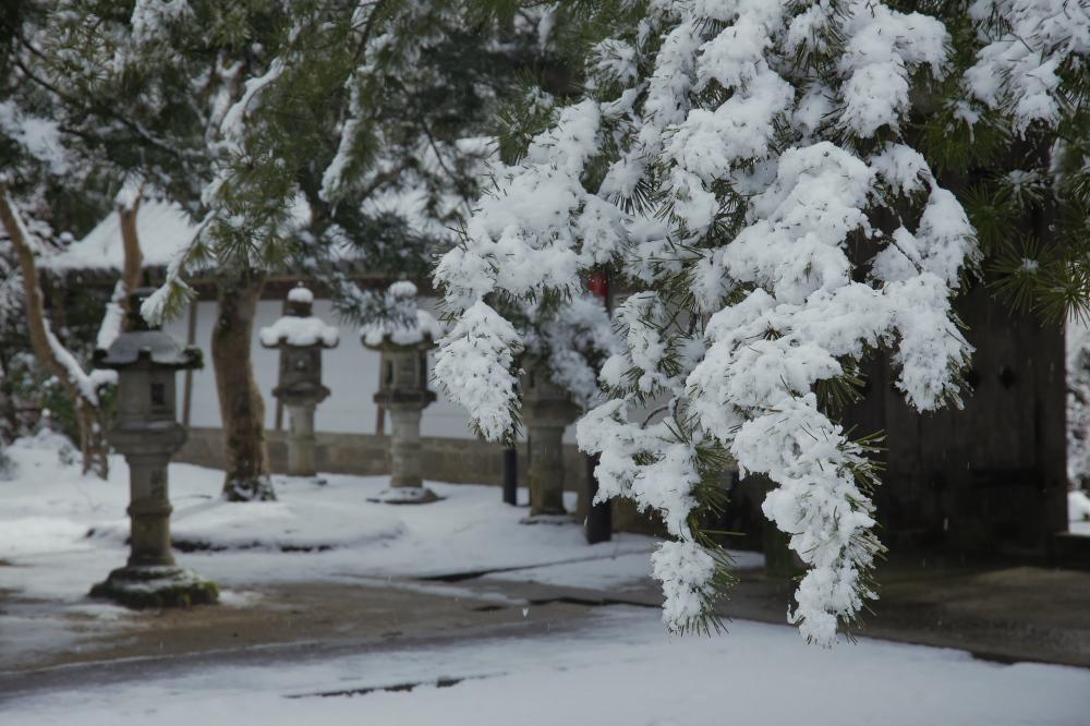西明寺 雪景色 2016_f0021869_23172514.jpg