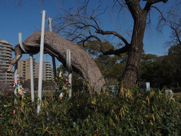 定点観測@鶴見橋東詰被爆樹_b0190540_1793579.jpg