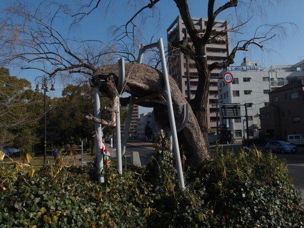 定点観測@鶴見橋東詰被爆樹_b0190540_1795013.jpg