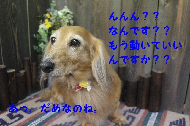 久しぶりに~♪_b0130018_7133335.jpg