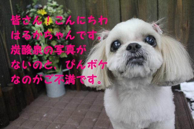 久しぶりに~♪_b0130018_725481.jpg