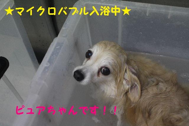 久しぶりに~♪_b0130018_795411.jpg