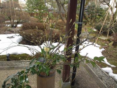 「雪垣」定例句会_f0289632_16502632.jpg