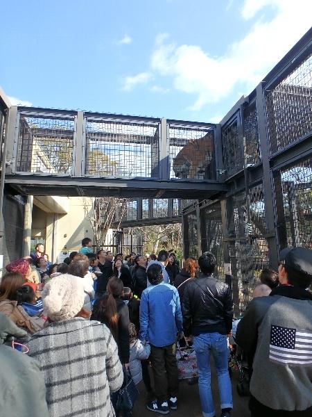 京都市動物園★バイキング_c0113733_12723.jpg