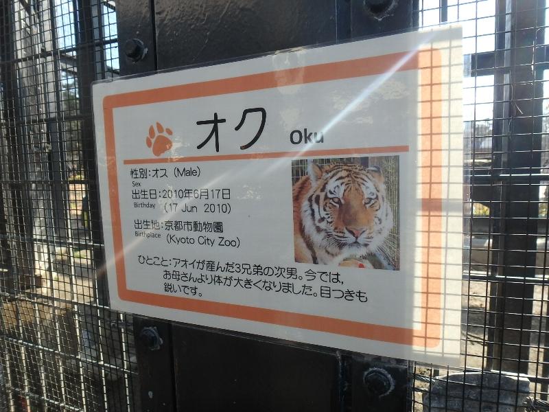 京都市動物園★バイキング_c0113733_1275195.jpg